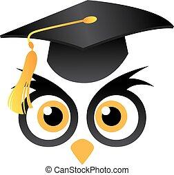 búho, cabeza, gorra, graduación