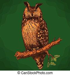 búho, estilo, águila, grabado, ilustración, retro