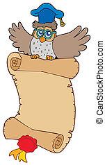 búho, vuelo, lector, pergamino