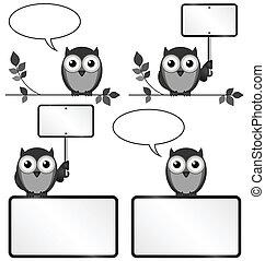 búhos, espacio de copia