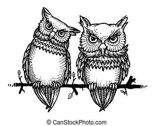 búhos, imagen, caricatura, lindo