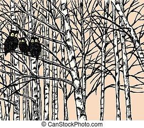 búhos, imagen, vector, bosque, abedul