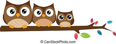 búhos, rama de árbol, familia , sentado