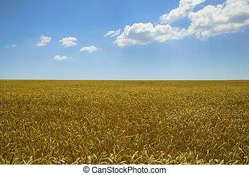 búza, nyár, mező
