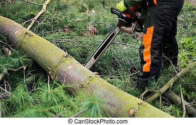 bûcheron, tronçonneuse, arbre, midsection., découpage, gros plan