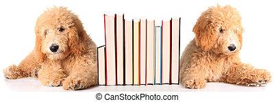 Bücherstütze, hundebabys