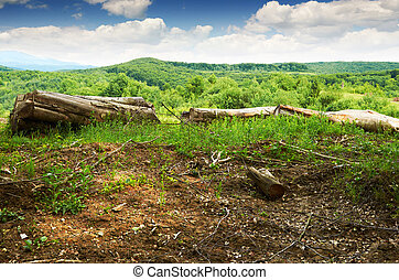 bükkfa, a hegyekben