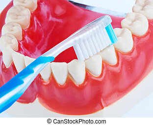 bürsten, wenn, zahn, zahnbürste, z�hne, modell