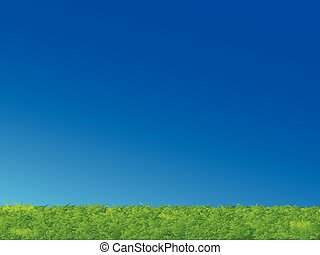 błękitna zieleń, trawa, niebo, krajobraz