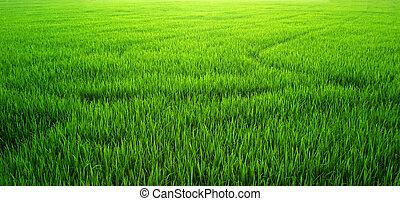 błękitna zieleń, trawa, niebo