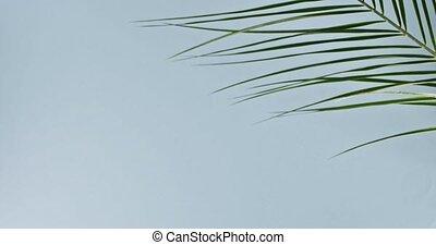 błękitne cienie, huśta się, 240fps, powolny, gładka zieleń, drzewo, tropikalny, tło., video, pełny, dłoń, gałąź, branch., powoli, hd, ruch
