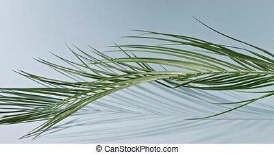 błękitne cienie, powolny, dookoła, drzewo, gładka zieleń, pień, tropikalny, tło., video, pełny, dłoń, 240fps, gałąź, branch., powoli, obraca, hd, ruch