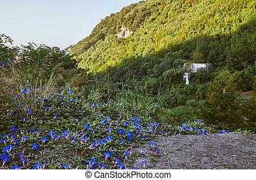 błękitne kwiecie, mountain's, krajobraz