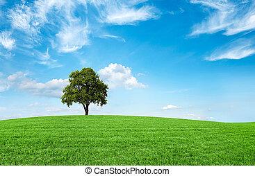 błękitne niebo, pole, drzewo