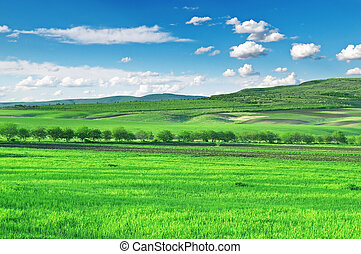 błękitne niebo, pole, góry