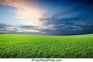 błękitne niebo, pole, zielony, pod, świeży, trawa