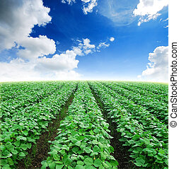 błękitny, agiculture, niebo pole, zielona trawa