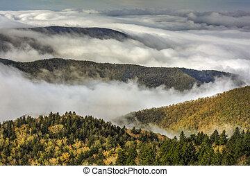 błękitny, aleja, mgła, grzbiet