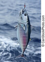 błękitny, bluefin, haczyk, zwolnić, tuńczyk, płetwa