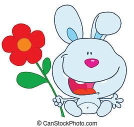 błękitny, dzierżawa, królik, kwiat
