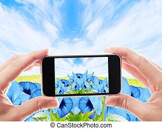 błękitny, fotografia, niebo, wziąć, tło, fioletowe kwiecie