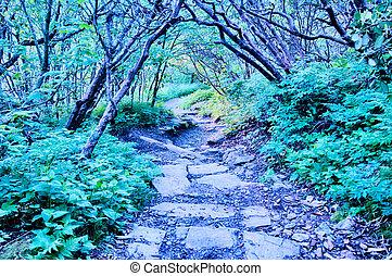 błękitny grzbiet, natura, rano, wcześnie, urwisty, aleja, ogrody