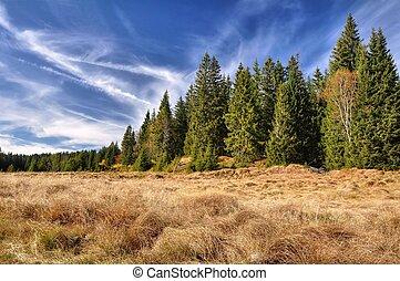 błękitny, jesień, drewna, łąki, sk