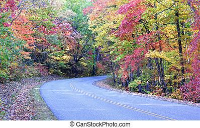 błękitny, jesień, kolor, grzbiet, aleja