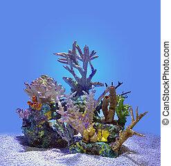 błękitny, koral, odizolowany, woda, rafa, pod