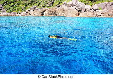 błękitny, koral, snorkeling, rafa