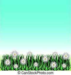 błękitny kwiat, trawa, odizolowany, tło