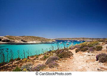 błękitny, laguna, gozo