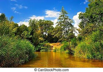 błękitny, lato, niebo, las, pod, rzeka