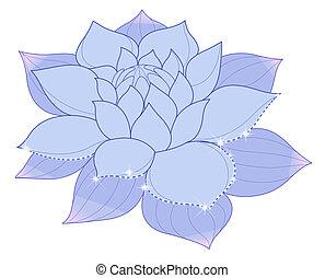 błękitny, lotos