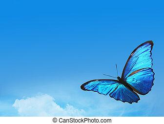 błękitny, motyl, jasne niebo