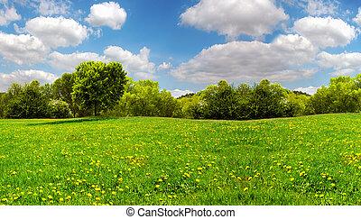 błękitny, pole, mniszki lekarskie, niebo, żółty