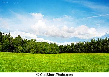 błękitny, pole, niebo, drzewa