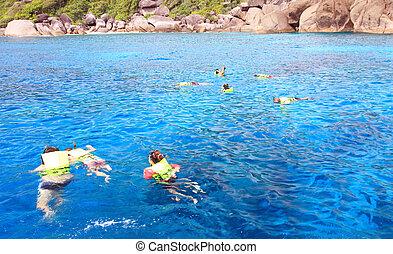 błękitny, rafa, snorkeling, koral