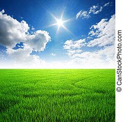 błękitny, ryż, niebo, światło słoneczne, pole, zielona trawa