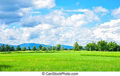 błękitny, ryż, niebo pole, zielona trawa