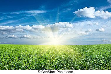 błękitny, słońce, niebo, zielone pole, zachód słońca, pod, świeży, trawa