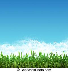 błękitny, sky., ułożyć, pole, zielona trawa
