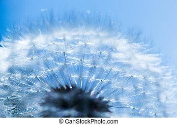 błękitny, szczelnie-do góry, sky., wiosna, mniszek lekarski, tło