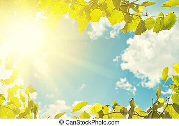błękitny, tło., liście, niebo, światło słoneczne