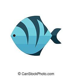 błękitny, tiger, fish