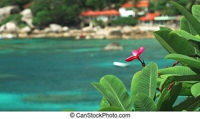 błękitny, tropikalny, turkus, frangipani, ocean polewają, ...