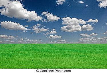 błękitny, wizerunek, niebo pole, jasny, zielona trawa