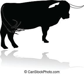 bœuf, taureau