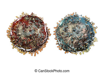 B- and T-lymphocytes. Immune cells isolated on white...