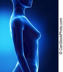 b, lateral, bröst, kvinnlig, synhåll, storlek